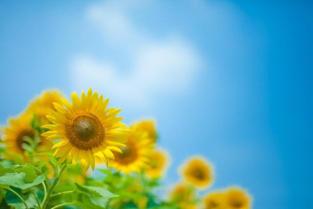 日野で心理カウンセリングを受けるなら、うつや育児の悩み、家庭や職場の人間関係まで相談できる「高幡心理相談所」へ